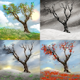 Lonely Tree.. file APK for Gaming PC/PS3/PS4 Smart TV