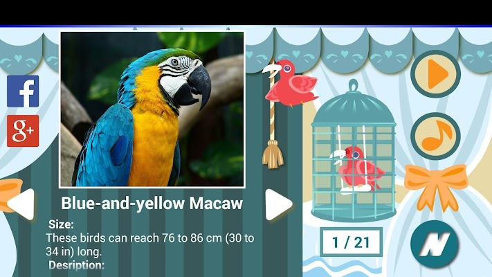 Best Bird Sounds - screenshot