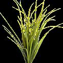 Montana Grasses icon