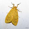 Arctiinae, Erebidae
