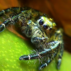 Hiding by Dhani Prasetya Yudhistira - Instagram & Mobile Other ( macro, spider, insect, animal )