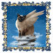 Angel Cat Live Wallpaper