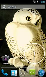 Audubon's OWLS HD+ Wallpaper- screenshot thumbnail