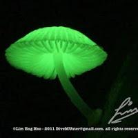 Lunar Mushroom