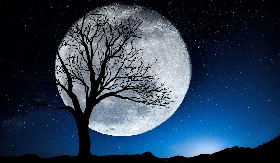 The Moon by Alne Anthony Rufo - Digital Art Places ( moon, blue sky, night photography, digital art, trees, night, photography, moonlight, nightscape )