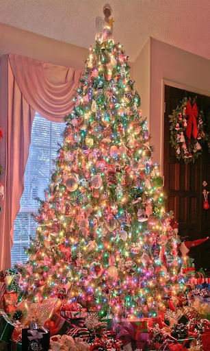 Christmas Bush Wallpaper