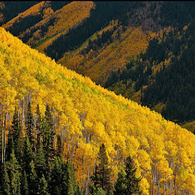 Ridgline by George Kremer - Landscapes Mountains & Hills ( mountains, valleys, fall, colorado, yellow, aspen, fall color,  )