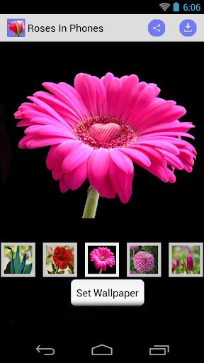 Phone Wallpaper of Roses