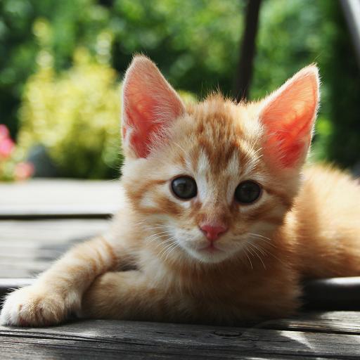 猫壁纸 個人化 App Store-癮科技App