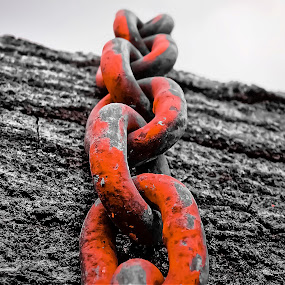 Logger chain by Sue Delia - Artistic Objects Industrial Objects ( tree, chain, logger, logging, steel, , selective color, pwc )