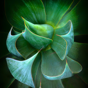 Agave by Mike Moats - Nature Up Close Other plants