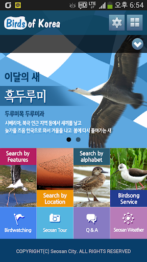 birds of korea