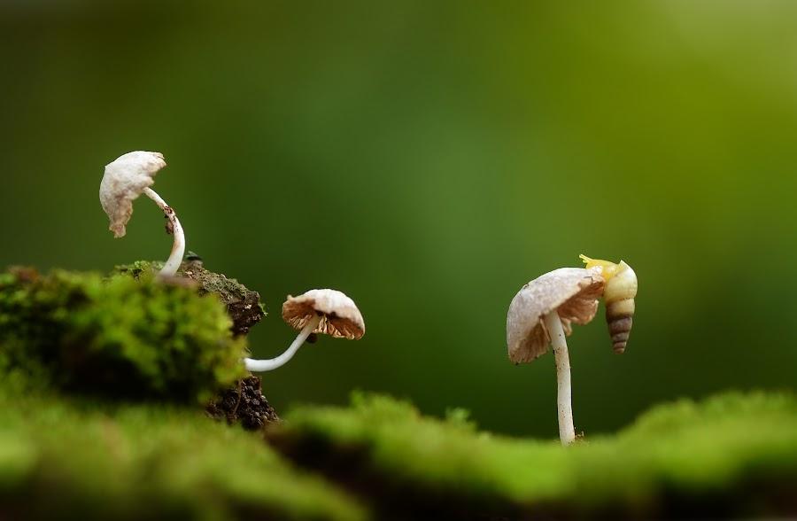 wonderland by Girdan Nasution - Nature Up Close Mushrooms & Fungi ( #makro #mushrooms #snail #indonesia )