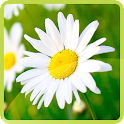 Nature Flowers Wallpaper icon