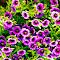 prettyflowersLightroom.jpg