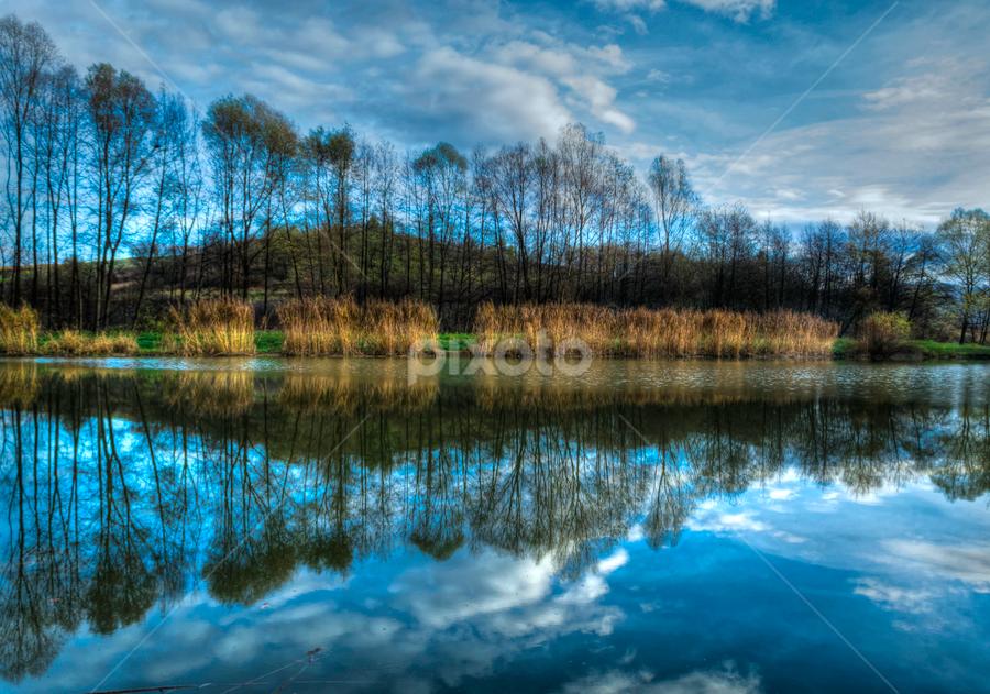Wind in The Trees by Siniša Biljan - Landscapes Waterscapes (  )