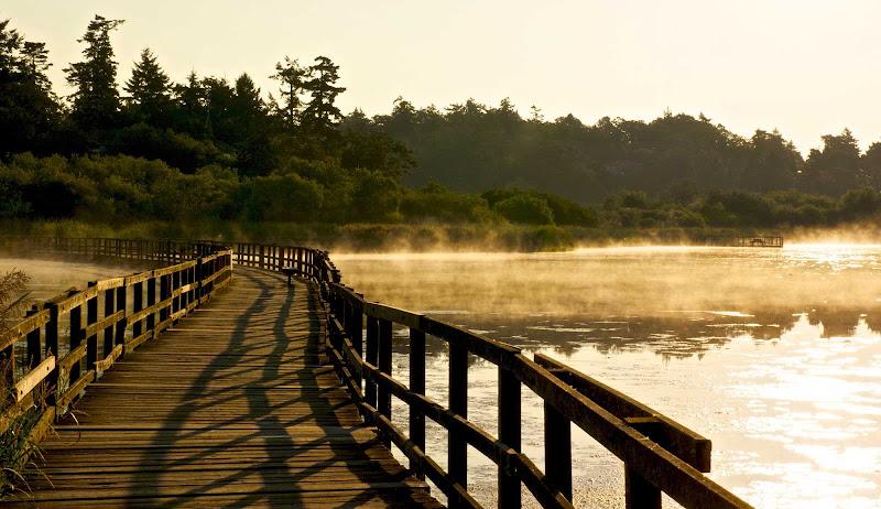 Morning at Swan Lake near Victoria, British Columbia.