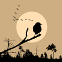 Bird Watching Tips icon