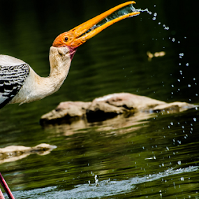 The Moment  by Sam's 1 Shot - Animals Birds ( painted stork  galloping water  lake frozen moments,  )