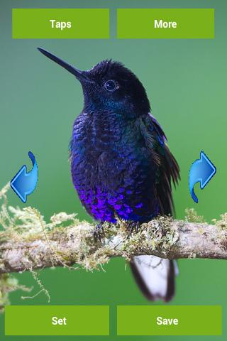 Hummingbird Wallpapers - screenshot