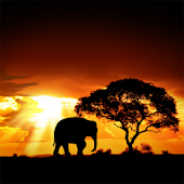 African Sunset Live Wallpaper