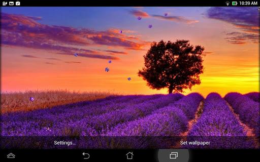 玩個人化App|薰衣草 动态壁纸免費|APP試玩