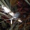 Greylag goose nest & egg