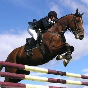 Horse Racing Free APK