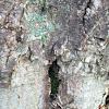 Rare Pice Of Bark