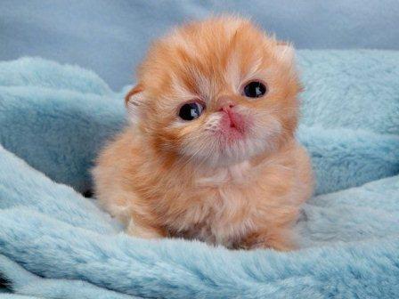 Download 66+  Gambar Kucing Anak Lucu Paling Bagus