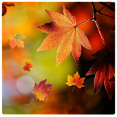 Fall Leaves Live Wallpaper