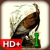 Audubon's Birds of America V01