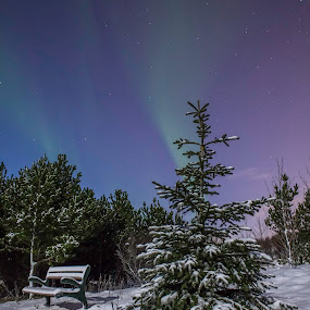 Relax by the tree by Kristvin Guðmundsson - Nature Up Close Trees & Bushes ( canon, xmas tree, xmas, aurora borealis, aurora, 60d, holidays, iceland, tree, season, snow, jolly, night, mood, mood factory, holiday, christmas, hanukkah, red, green, lights, artifical, lighting, colors, Kwanzaa, blue, black, celebrate, tis the season, festive )