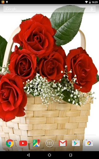Rose Wallpapers Free