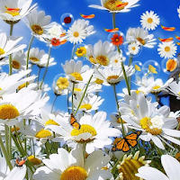 Flowers Live Wallpaper 4.4
