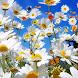 Flower Free Live Wallpaper image
