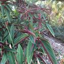 (type of) prayer plant