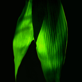Sun Behind Leaf by Arif Hossain - Abstract Light Painting ( bangladesh, best photography, arif hossain photography, arif, photography,  )