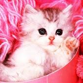 3D cute cat 20