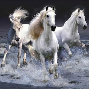 Horses Jigsaw Puzzles- screenshot thumbnail