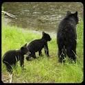 Alaska Critters Free icon