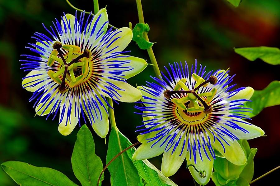 by Nikša Šapro - Flowers Flowers in the Wild (  )