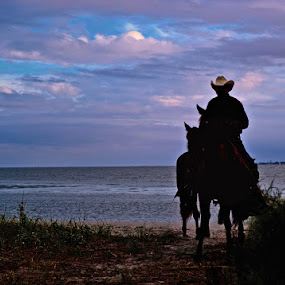 Daufuskie Island Sunset by Daniela Snyder - Animals Horses ( creativity, lighting, art, artistic, purple, mood factory, lights, color, fun )