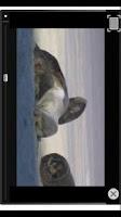 Screenshot of FLV Player (alpha version)