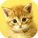 Baby Animals Game icon
