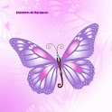 images of butterflies