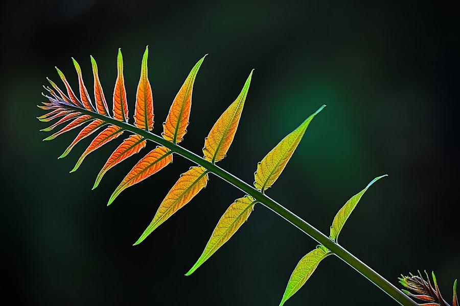 by Nikša Šapro - Nature Up Close Leaves & Grasses (  )