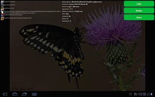 Screenshot of 500px Land