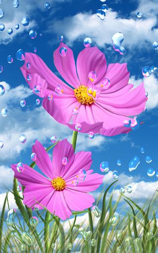 夏季雨,鲜花,高清壁纸