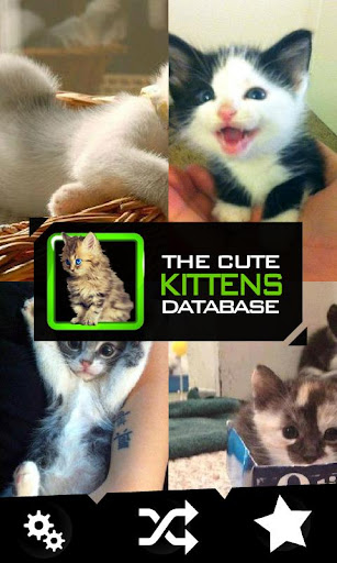 The Cute Kittens Database